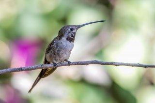 Oasis_Hummingbird.jpg