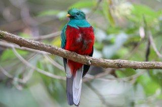 Resplendent_Quetzal.jpg