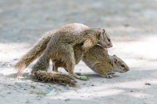 Tree-Squirrel.jpg