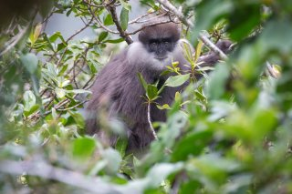 Bear-Monkey.jpg
